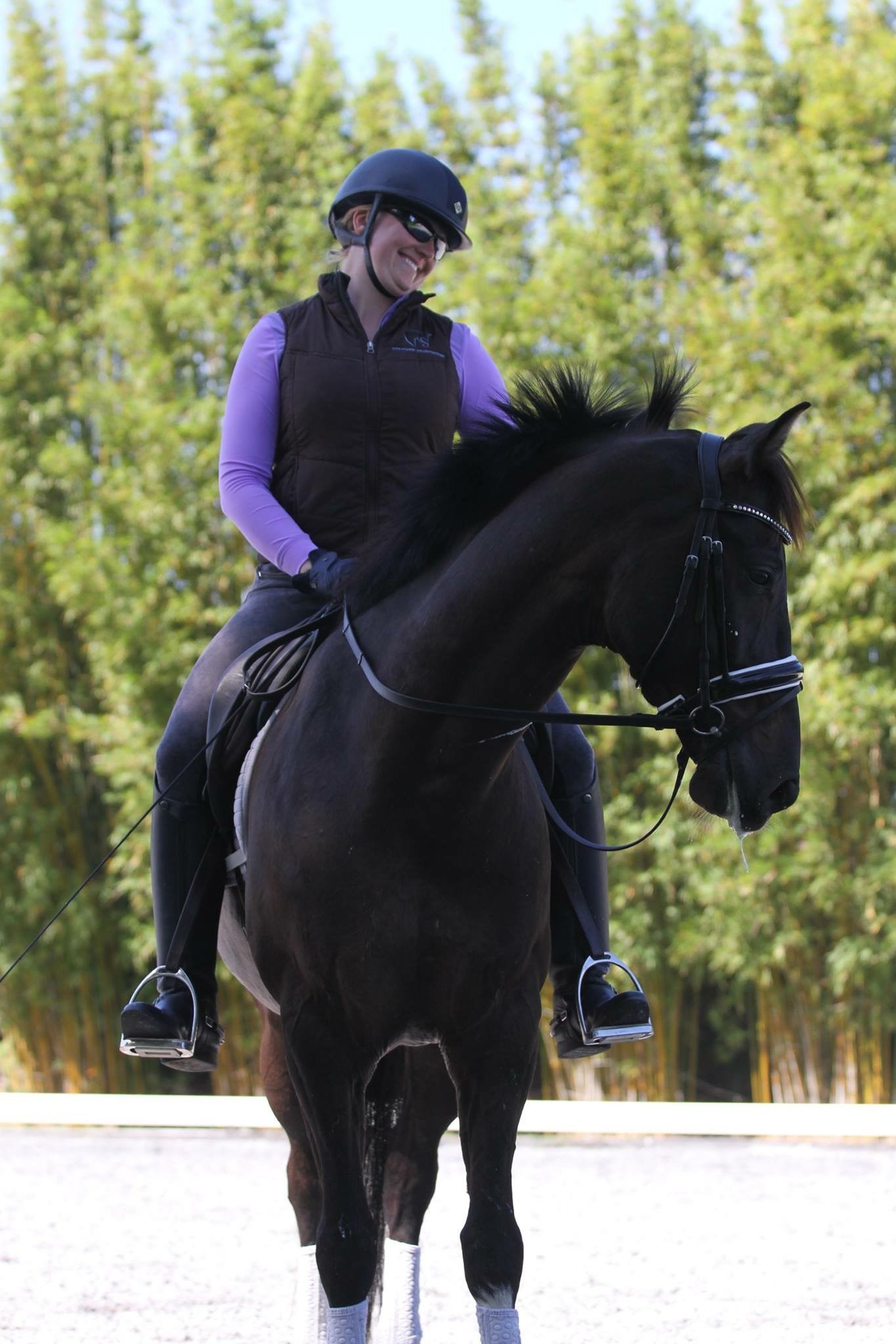 Microchipping Clinic To Benefit Danny Ocean Colic Fund